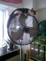 扇風機とニャンチョビ.JPG